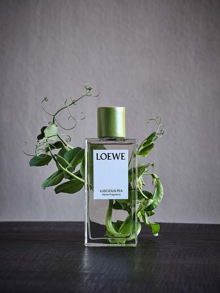 Ambientados da coleção Loewe Home Scents
